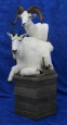 Mountain Goat/Dall Sheep