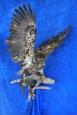 Eagle- Bald 20