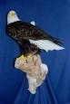 Eagle- Bald 03
