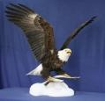 Eagle- Bald 04