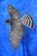 Hawk- Sharp Shinned 08