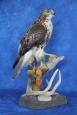 Hawk- Red Tail 12