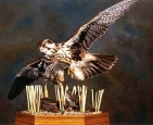 Falcon- Prairie 01