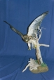 Hawk- Swainsons 03