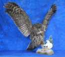 Owl- Great Grey 19