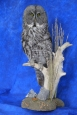 Owl- Great Grey 20