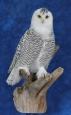 Owl- Snowy 11