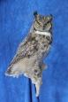 Owl- Great Horned 24
