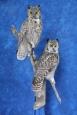 Owl- Great Horned 25