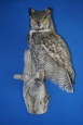 Owl- Great Horned 08