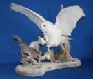 Owl- Snowy 06
