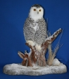 Owl- Snowy 07