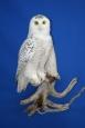 Owl- Snowy 08