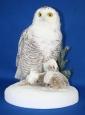 Owl- Snowy 09