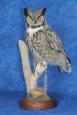 Owl- Great Horned 26