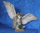 Owl- Great Horned 27