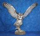 Owl- Great Horned 17