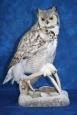 Owl- Great Horned 18