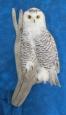 Owl- Snowy 15