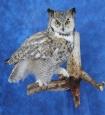 Owl- Great Horned 28