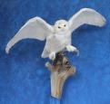 Owl- Snowy 18