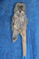 Owl- Great Grey 18