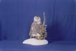 Owl- Snowy 21