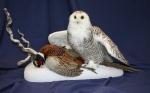 Owl- Snowy 04