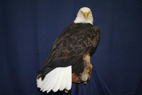 bird (19)