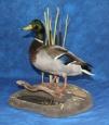 Duck- Mallard 07