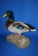 Duck- Mallard 03
