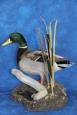 Duck- Mallard 08