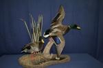 Duck- Mallard 02